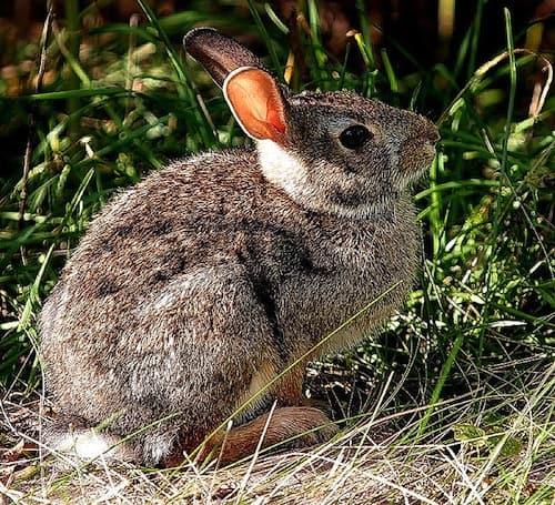 Kaninchen Im Garten Vertreiben