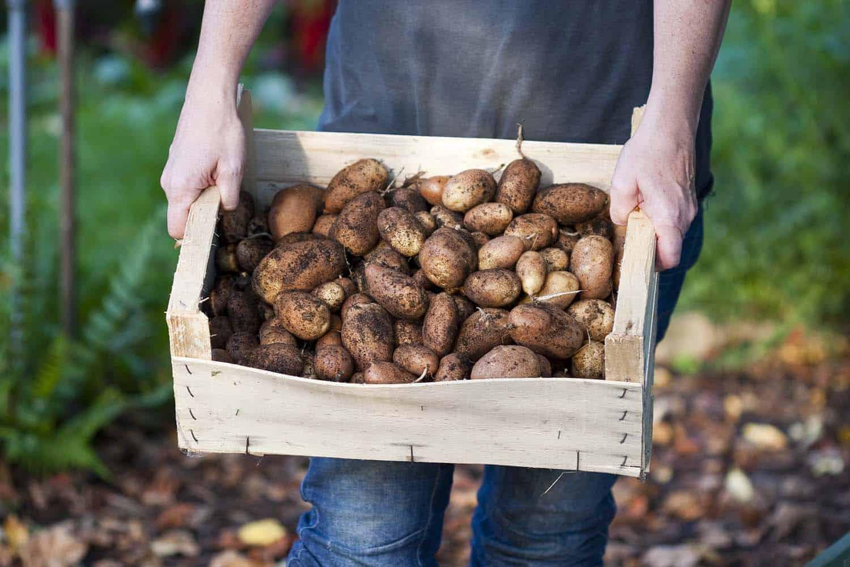 Bauanleitung Kartoffelturm - Kartoffelernte in einer Kiste