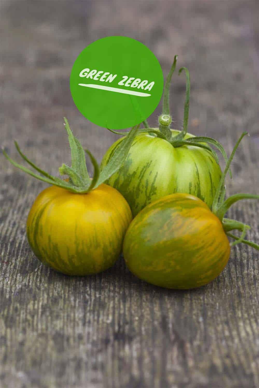 Tomaten selbst ziehen: Green Zebra, sehr leckere, grün gestreifte Sorte