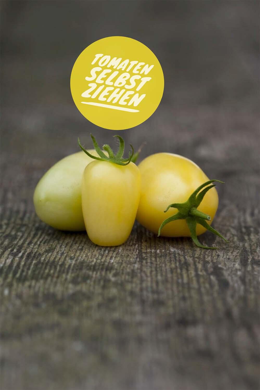 Tomaten selbst ziehen: Cream Sausage, längliche blassgelbe Cocktailtomate