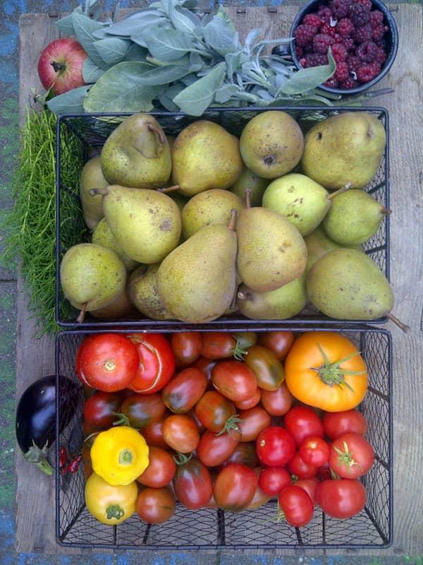 Sortenechte Tomatenpflanzen (alte Tomatensorten) kann man auch kaufen. Vier alte Tomatensorten, deren Anbau lohnt.
