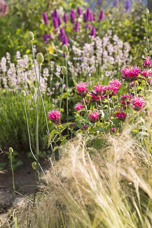 Blog-Parade: Mein Gartenjahr in zwölf Bildern