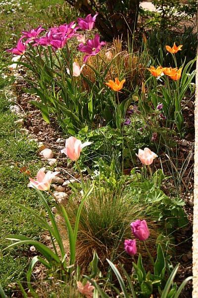 Mein Gartenjahr in zwölf Bildern Tulpen im März