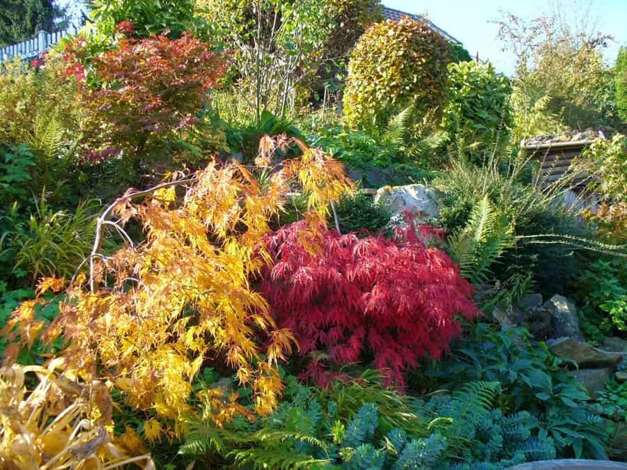 Mein Gartenjahr in zwölf Bildern Farbe im Garten im November