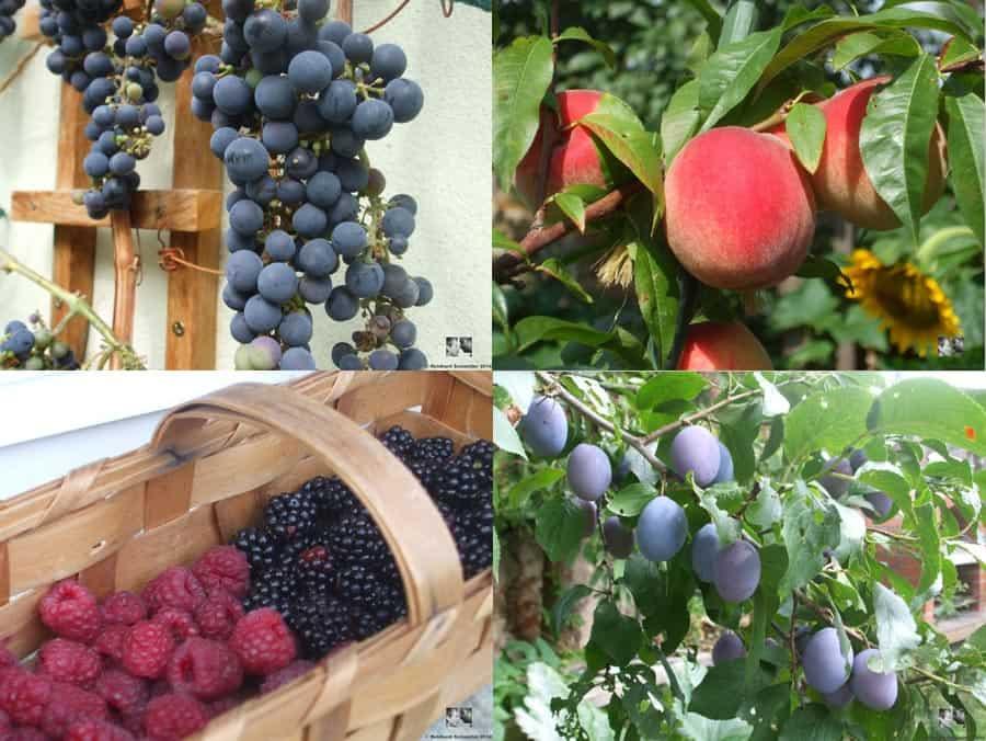 Mein Gartenjahr in zwölf Bildern Garten im August Pecaro Schneider