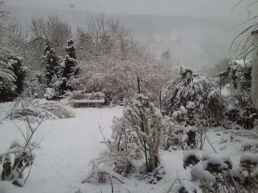Mein Gartenjahr in zwölf Bildern Garten im Dezember