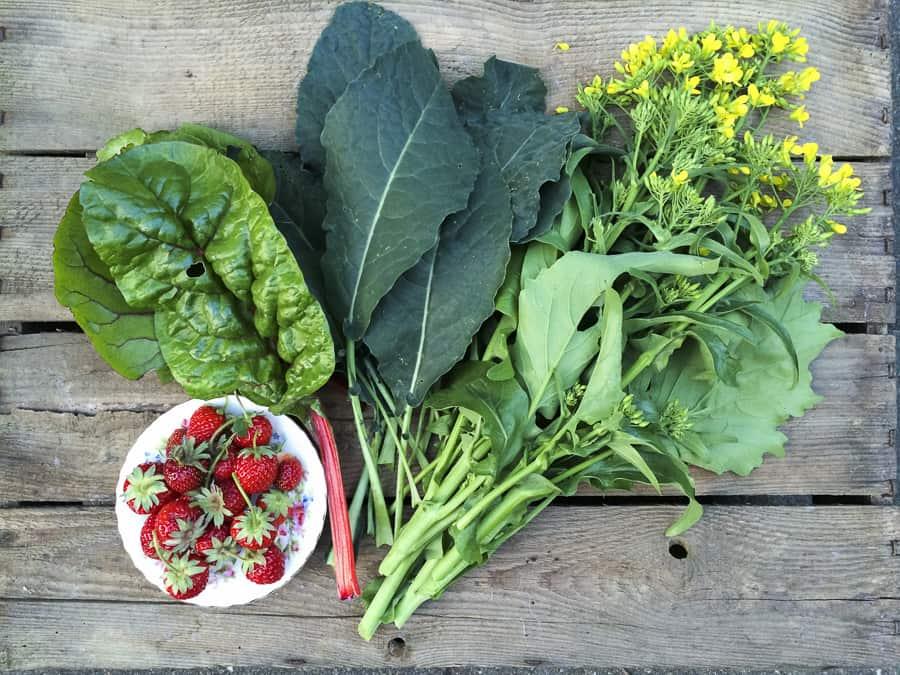 unsere Ernte vom 3.06.15, palmkahl, mangold, sprossenbrokkoli, Erdbeeren