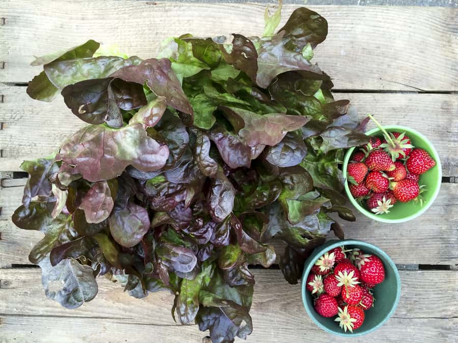 Gartenernte: Salat und Erdbeeren
