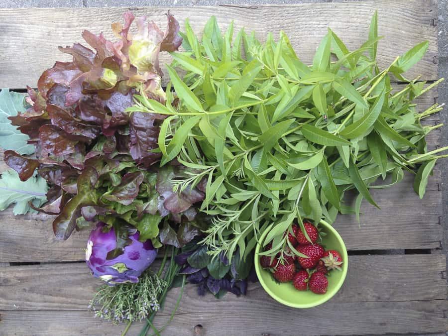 Unsere Ernte vom 12.06. viel Zitronenverben, Salat und Erdbeeren
