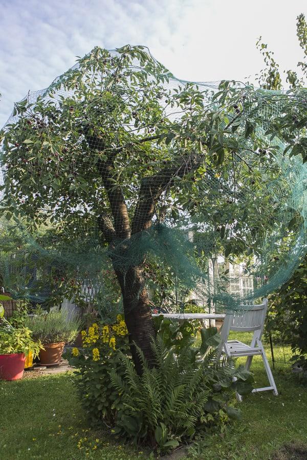 Vogelschutz für Obstbäume und Beerensträucher