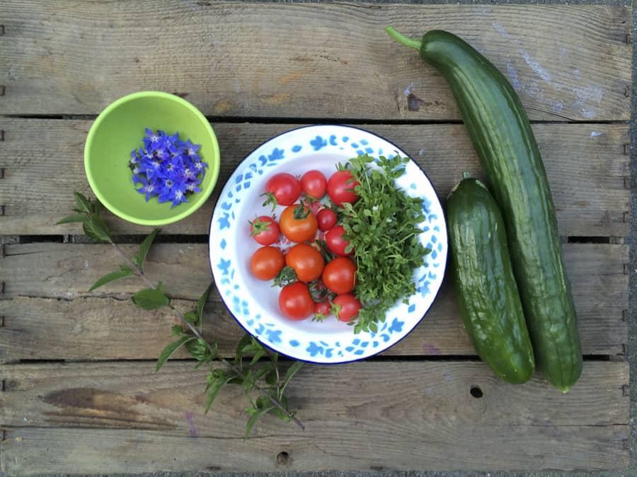 Ernte im Juli Gurken und Tomaten