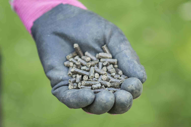 düngen mit Pferdeäpfeln pellets