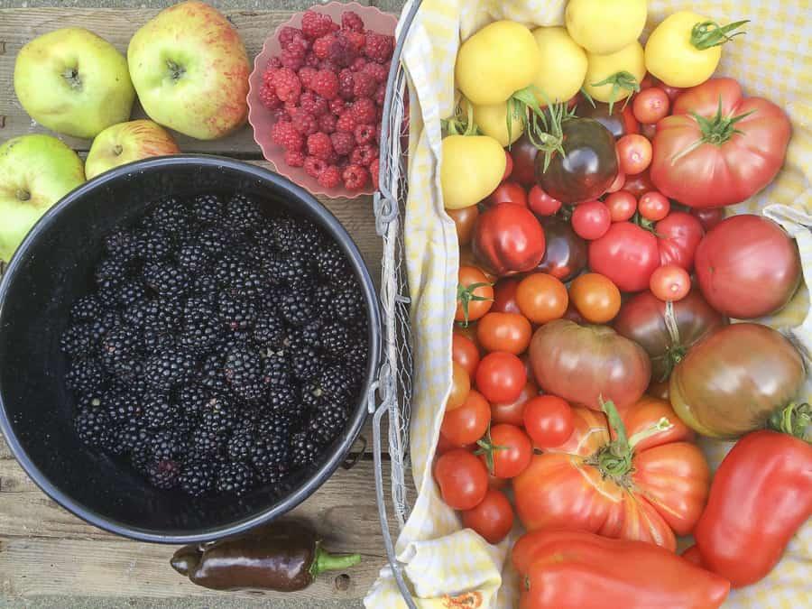 August ernte Tomaten, Brombeeren, Himbeeren, Äpfel
