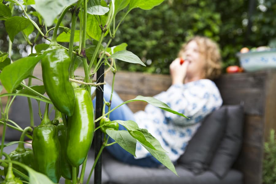 Gemüse in Töpfen anbauen - 3 Tipps für eine fette Ernte