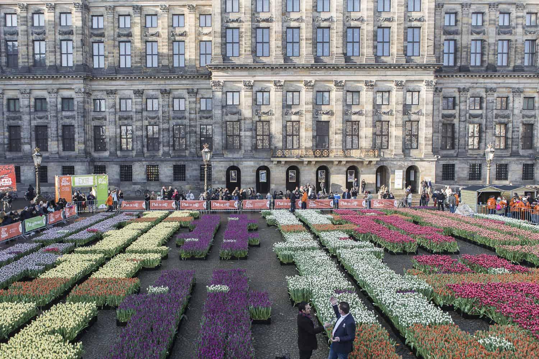 tulpenfeld vor prinzenpalast Amsterdam