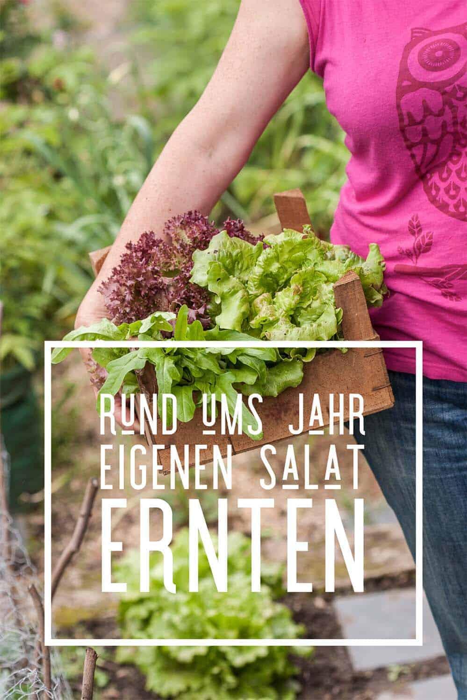 """Ihr wollt das ganze Jahr eigenen Salat ernten? Probiert es mal mit meinem """"Nie-wieder-Salat-kaufen"""" Anbauplan. Mit Sorten-Vorschlägen für jeden Monat."""