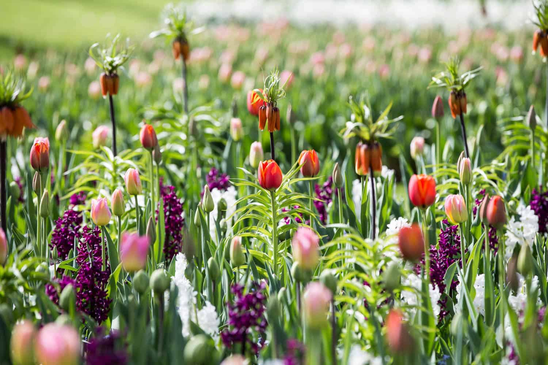 keukenhof tulpenparadies holland