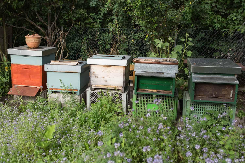 neuer Bienenstand