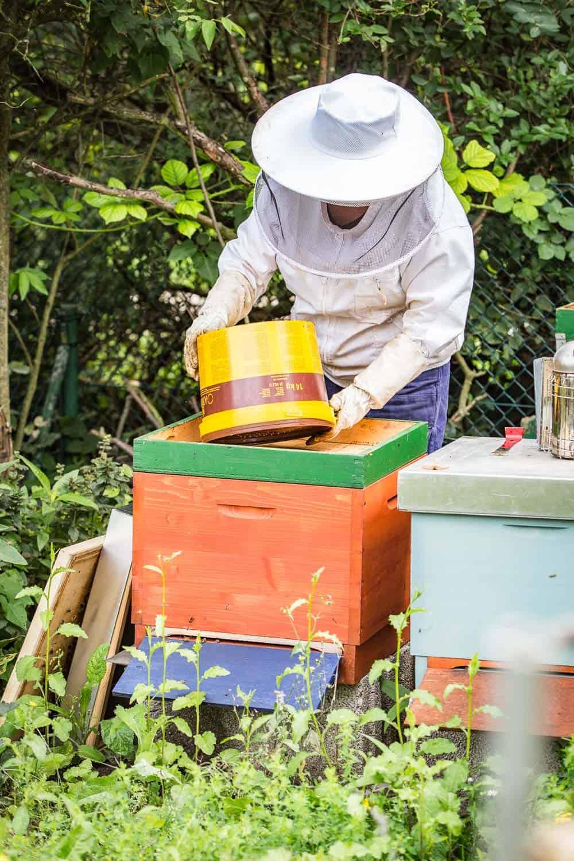 Bienensaison 2017 füttern