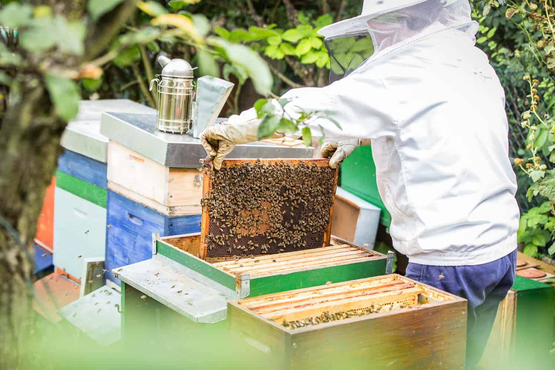 Bienensaison 2017 Kontrolle