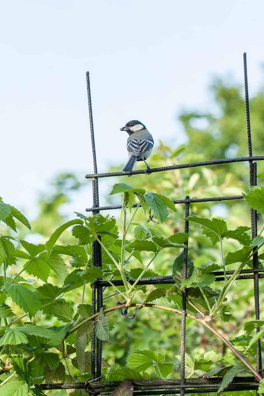 vogelfutter selber machen Meise