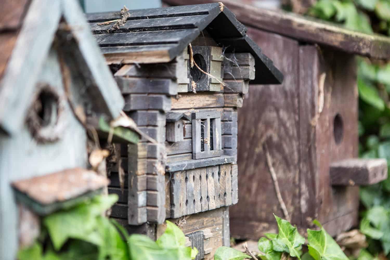 vogelfutter selber machen mit rezepten f r k rner und weichfutterfresser. Black Bedroom Furniture Sets. Home Design Ideas