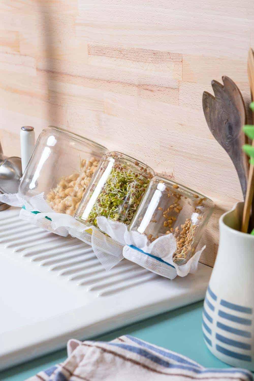 Sprossen selbst ziehen ohne Keimgerät, das ist ganz einfach. Schon nach 3-4 Tagen können die ersten Sprossen auf der Fensterbank geerntet werden. Zutaten: Marmeladegläser, Saatgut, Gaze oder Wäschebeutel.