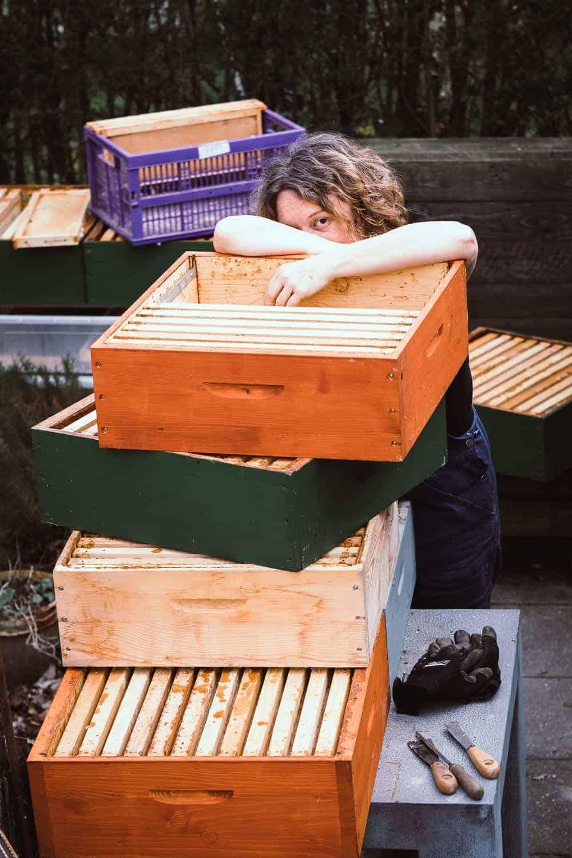 Honigraum aufsetzen