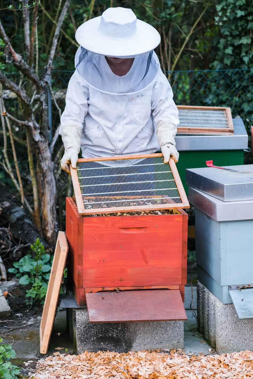 Honigraum aufsetzen Absperrgitter einlegen