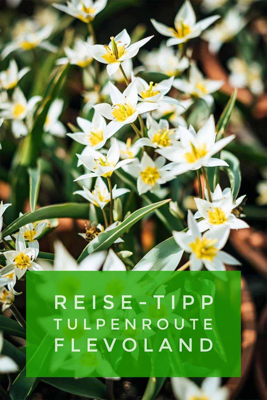 Zur Tulpenblüte nach Flevoland. Mit Auto, Fahrrad oder zu Fuß mitten durch Tulpenfelder. Auf 7 Routen zwischen 10 und 70 Kilometer. Ein großer Familienspaß!