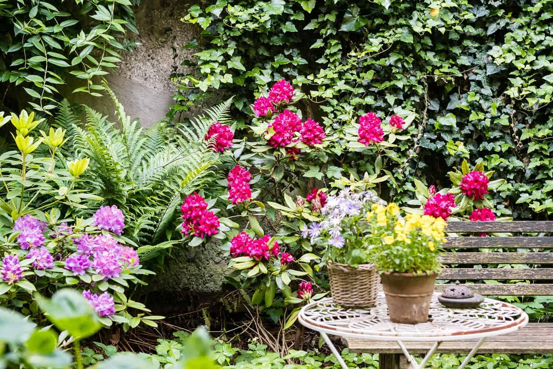 Rhododendren lieben Schatten