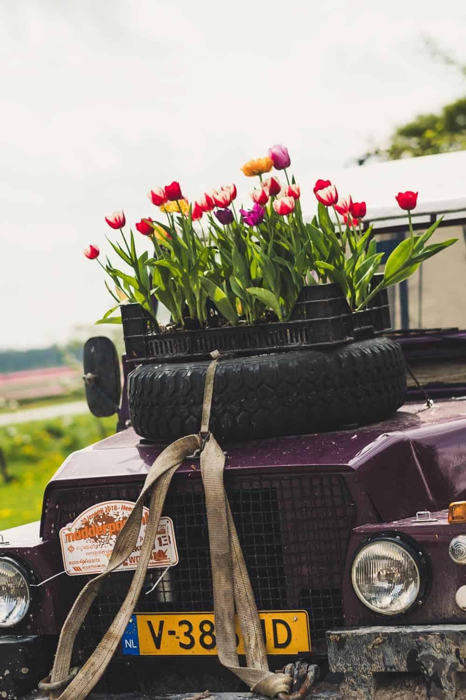 Jeep mit Tulpen auf Autohaube
