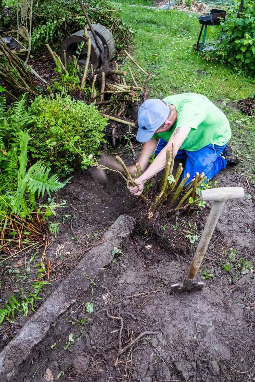 Hecke ausgraben Gartenhelfer SmartHands
