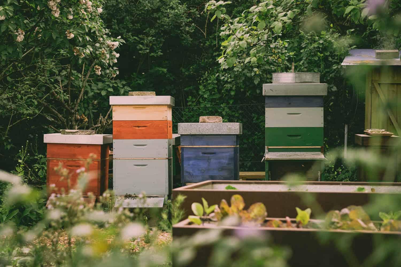 Sind Bienen im Kleingarten erlaubt? Welche geseztlichen Regelungen gibt es? Wie geht man damit um, wenn der Nachbar etwas gegen die Bienenhaltung hat?