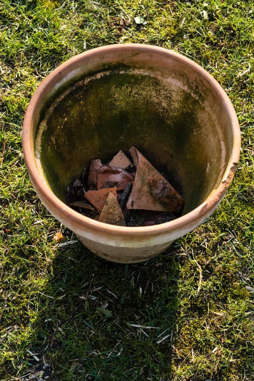 In Kübeln brauchen Teepflanzen eine gute Drainage. Staunässe bekommt ihnen nicht gut.