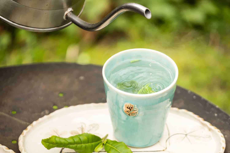 Die frischen Teeblätter der Camelia sinensis werdenmit heißem Wasser übergossen.