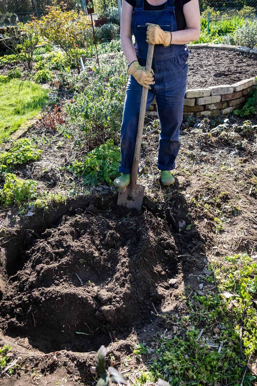 Für das Moorbeet wird die zunächst die Muttererde einen Spaten tief ausgehoben.