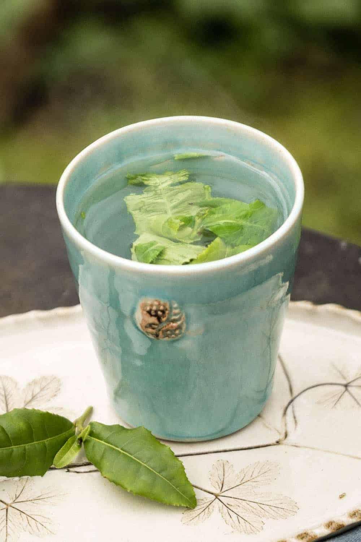 Echter Tee aus eigenem Garten. die erste Verkostung einer frisch aufgebrühten Tasse Tee.