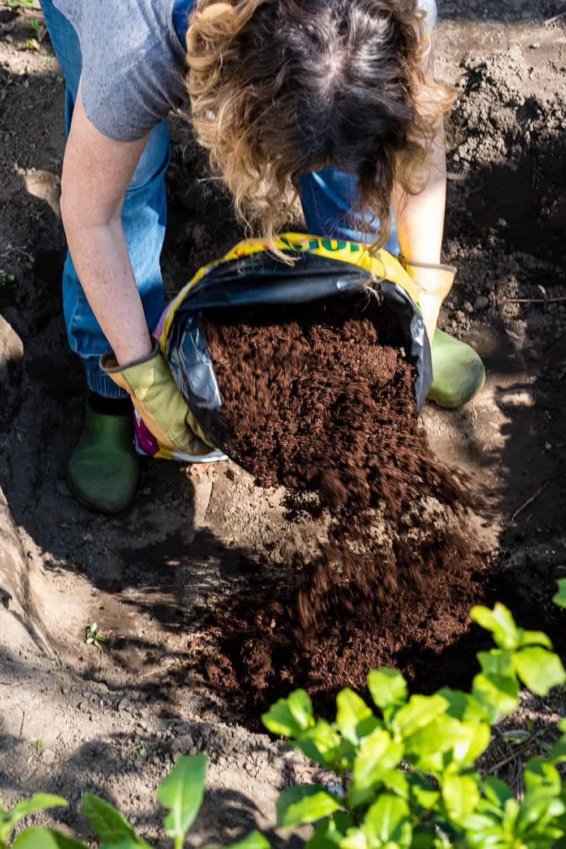 Das Moorbeet wird mit saurer Rhododendron-Erde gefüllt.
