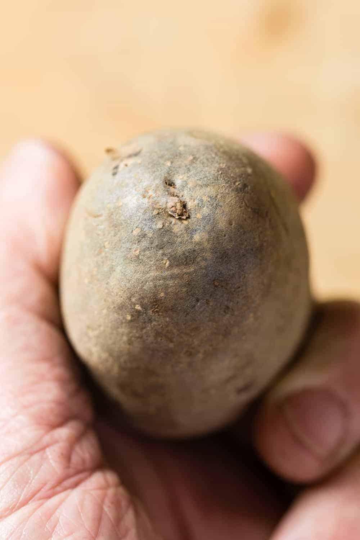 das Ende an dem die Kartoffel mit der Mutterpflanze verbunden war zeigt nach unten