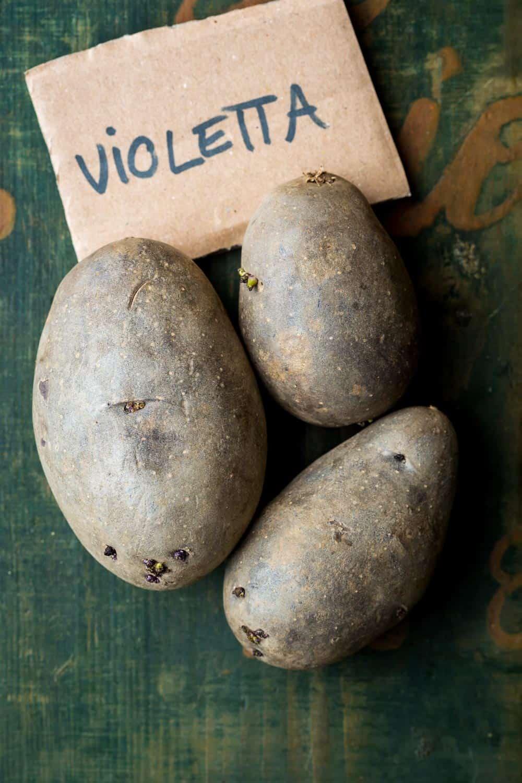 die mittelfrühe Violetta, ehemals Blaue Elise genannt, ist eine ertragreiche Neuzüchtung mit lila Fleisch. Sie hat einen angenehmen und kräftigen Kartoffelgeschmack, ist geeignet als Salz-, Pell-, Bratkartoffel oder bunter Kartoffelsalat.