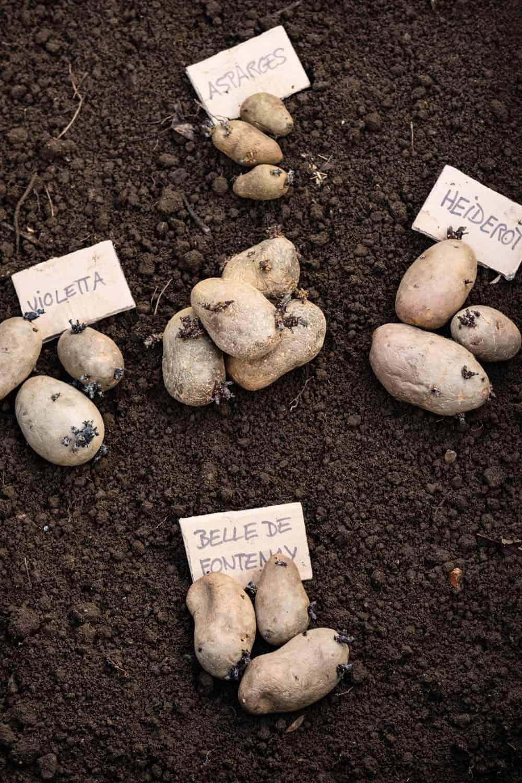 Diese Kartoffelsorten haben wir angebaut.