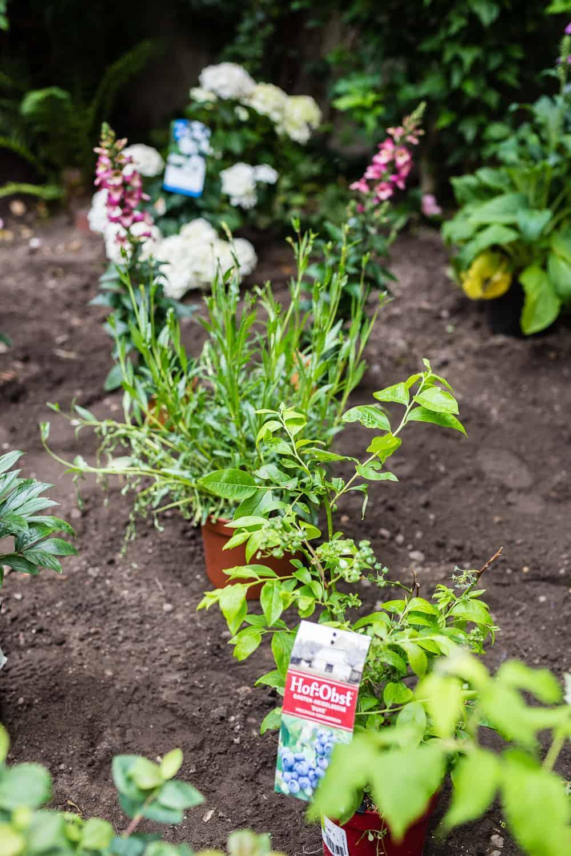 Blumenbeet Anlegen Teil 1 Sonnige Bis Halbschattige Standorte