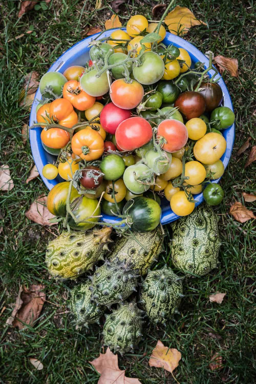Saatguttausch-Aktion Kiwano und verschiedene Tomatensorten
