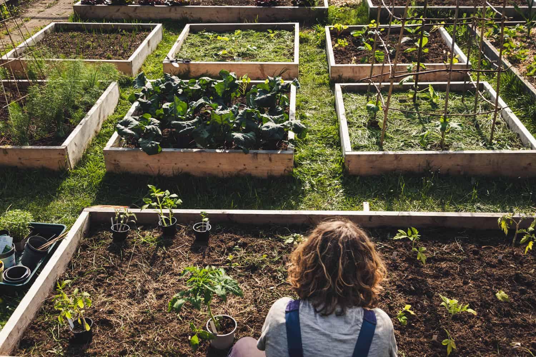 Gemüsebeete werden bepflanzt