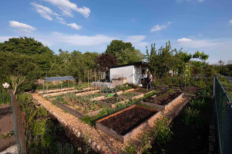 Garten automatisch bewässern