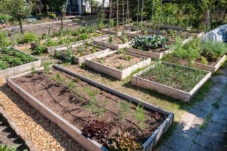 Rahmenbeete mit Gemüse automatisch bewässern