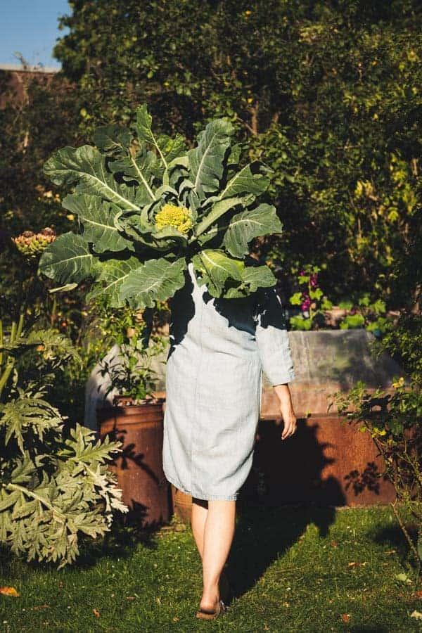 Macht mit bei unserer Gartenrezepte-Challenge