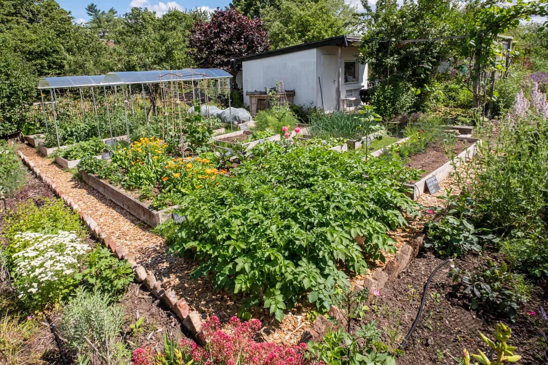 automatische Gartenbewässerung im Gemüsegarten