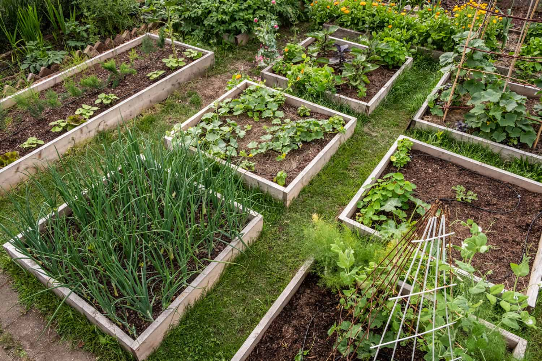 Rahmenbeete mit Gemüse